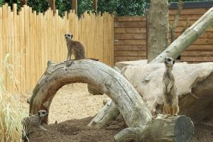 Theme Parks and Zoo in Chelmsford